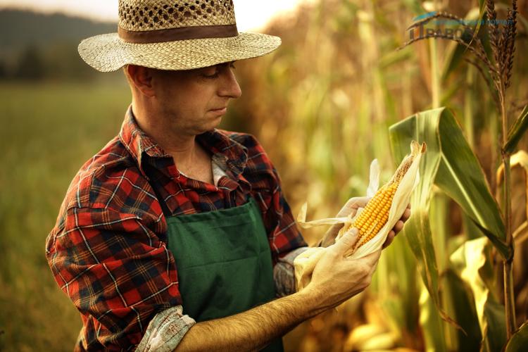 Закон о фермерском хозяйстве